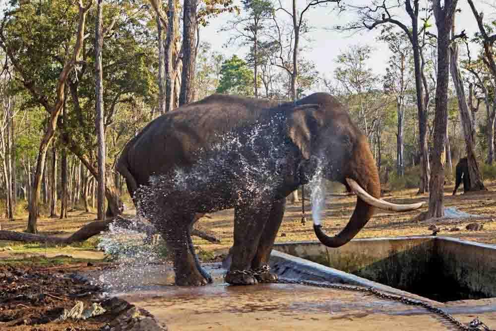 elephantcamp-1